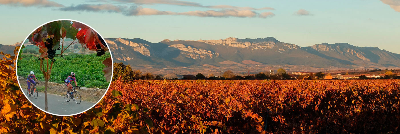 Vineyards in La Rioja